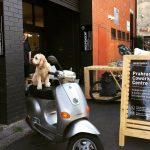 Office Dog Henry